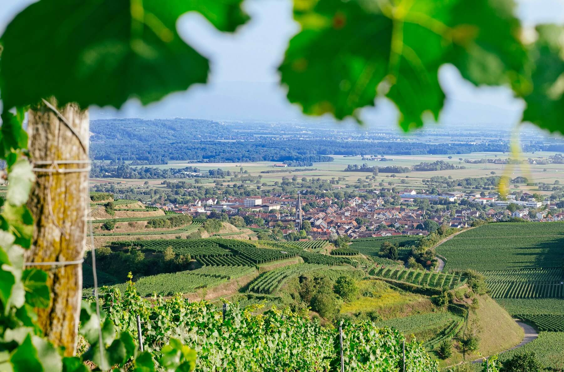 Ihringen, Kaiserstuhl © Johannes Meger