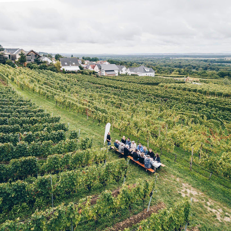Erlebnis im Weinberg - Tisch zu Weinprobe mit Schlemmerplatte
