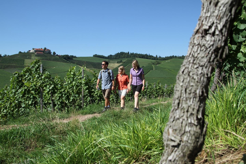 Walking Weinprobe
