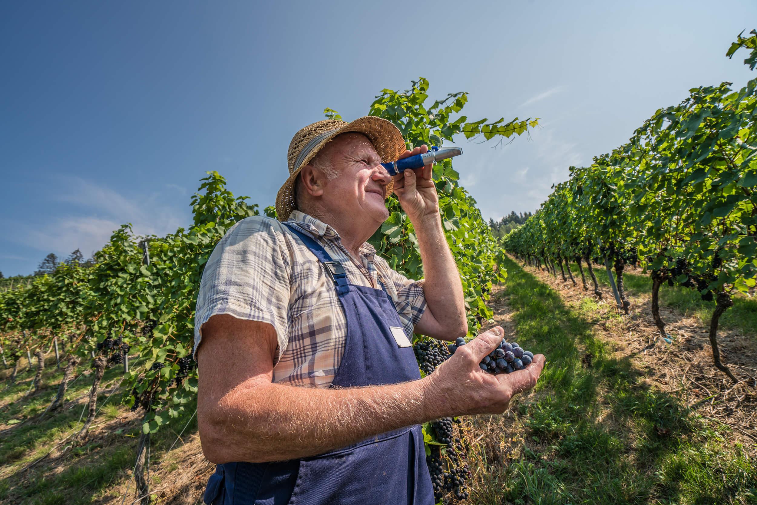 Winzer bei der Arbeit im Weinberg © Tourist-Info Kappelrodeck