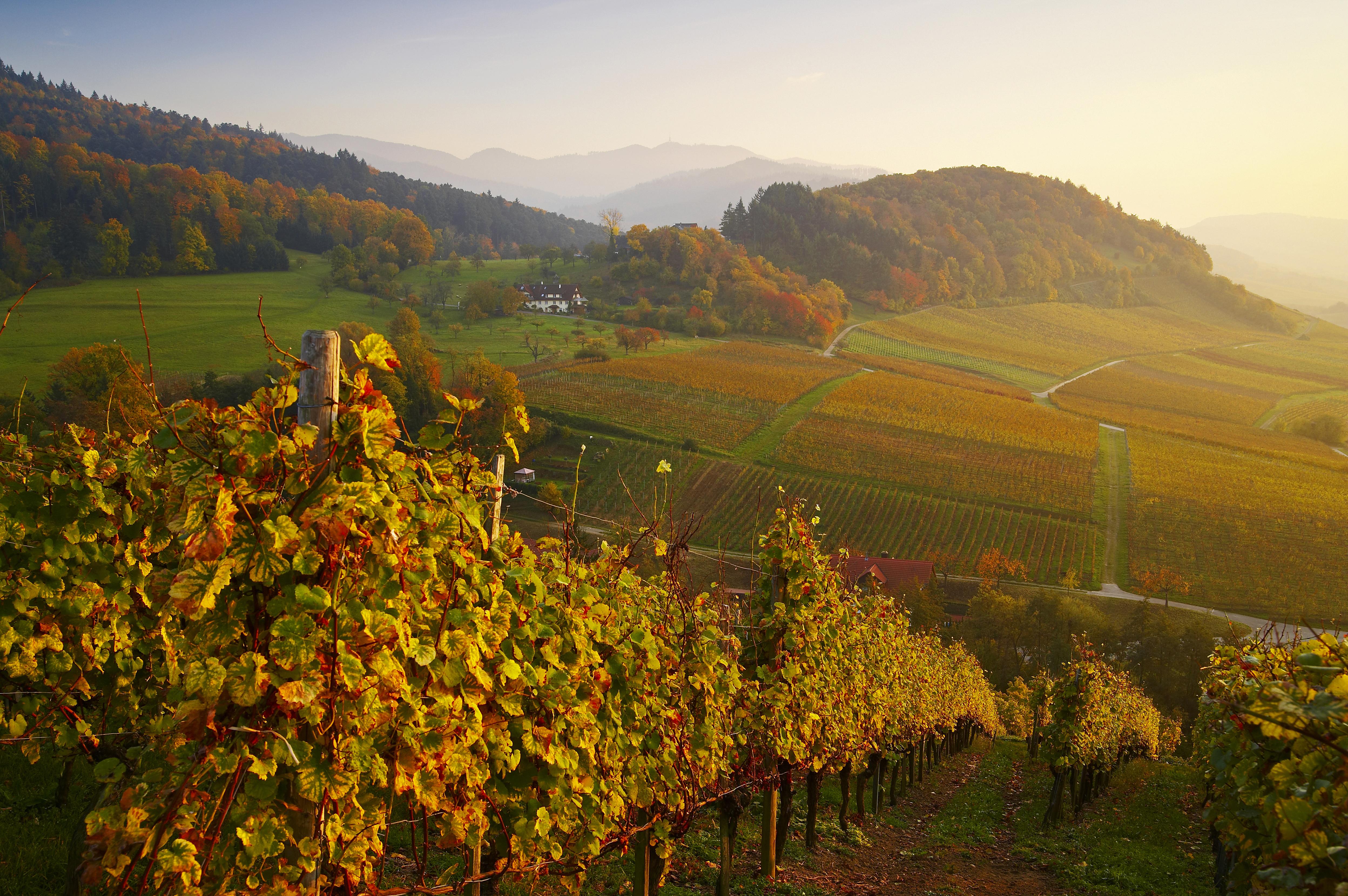 Markgräflerland Schwarzwald Castellberg Herbststimmung